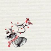 Softpoint-Serviette KNUT 40 x 40 cm